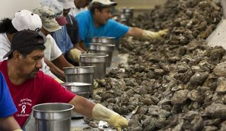 ADVANCE FOR SUNDAY OCT. 2 AND THEREAFTER - In an Oct. 29, 2014 photo, work crews sort through oysters at Jeri's Seafood in Anahuac, Texas. The news in 2014 Jeri's owner Ben Nelson and his son-in-law, Chambers County Justice of the Peace Tracy Woody, had leased 23,000 acres of bay bottom that included some of the choicest oyster reefs severed long friendships among the three largest oyster operations in Galveston Bay and spawned lawsuits that have brought uncertainty to an industry decimated by years of bad weather and predators.(J. Patric Schneider/ Houston Chronicle via AP)