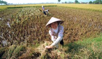 The unpredictability of floods, chronic pollution issues, shifting climate norms and interference caused by Chinese dams are creating severe woes for Vietnamese farmers growing rice, a staple crop of the Southeast Asian country's diet. (Associated Press)