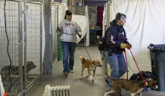 Volunteers walk dogs through a makeshift animal shelter operated by the Sevier County Humane Society in Sevierville, Tenn., Thursday, Dec. 8, 2016. Officials hope to reunite scores of pets separated from their owners during wildfires that did heavy damage to the area the previous week. (AP Photo/Erik Schelzig)