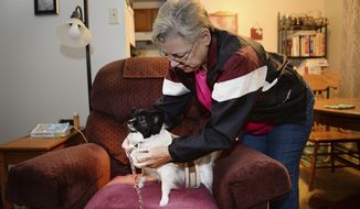 In this Tuesday, Nov. 22, 2016, photo, Ann Green, 68, bundles up her papillon, Bella, for a walk in Fort Collins, Colo. Green suffers from chronic back pain and lives with her two papillons, Bella and Mystic, in a subsidized apartment near City Park. Green lost her job six years ago after back surgery. She picks up extra money where she can, this year working as an election judge to supplement her monthly $1,300 Social Security disability check. (Valerie Mosley/The Coloradoan via AP)