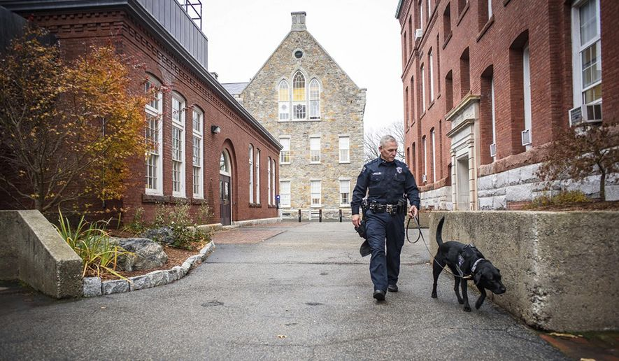 In this Nov. 29, 2016 photo, Bella, a Worcester Polytechnic Institute police department explosives detection dog is walked on campus by handler officer Brian Lavelle in Worcester, Mass. The International Association of Campus Law Enforcement Administrators says there has been an increase in the use of these dogs at colleges over the past year with bombings occurring more frequently worldwide. (Steven King/Worcester Polytechnic Institute via AP)