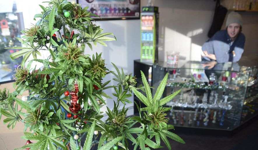 A faux marijuana Christmas tree sits in the window of Shire Glass, a fine tobacco shop on Main Street in Great Barrington, Mass, Wednesday, Dec. 14, 2016. Dan Meandro, an employee, talks about how his dialogue with customers changes on December 15 with the new laws that allow Massachusetts residents over the age of 21 to possess, use and grow home-grow marijuana. (Gillian Jones/The Berkshire Eagle via AP)