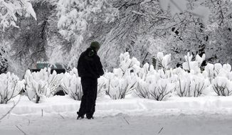 A pedestrian stops to look at snow-covered rose bushes in the park blocks in Portland, Ore., Wednesday, Jan. 11, 2017. A major snowstorm spread through Portland and parts of Washington state overnight, toppling trees, closing schools and cutting power to thousands.(AP Photo/Don Ryan)