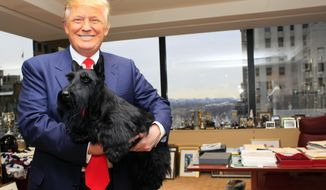 In this Feb. 17, 2010, file photo, Sadie, the Scottish terrier who won the best in show title at the Westminster Kennel Club Dog Show poses for photos with Donald Trump, in New York. Five winners at Westminster in recent years celebrated their victories by posing with the current president at Trump Tower. (AP Photo/Mary Altaffer)