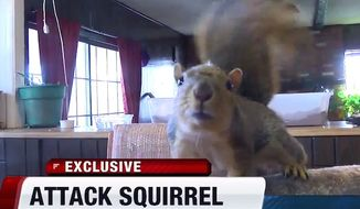 An Idaho man's pet squirrel stopped a burglary by repeatedly attacking the suspect on Feb. 7, 2016. (KIVI-ABC 6 Idaho screenshot)
