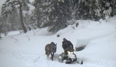 FILE - In this December 2016 file photo provided by the U.S. Forest Service, B.J. Hill from Swift Creek Outfitters helps rescue his horse, Valentine, from a remote area in northwestern Wyoming. Valentine spent eight weeks in the wilderness after being left behind by an excursion company after getting sick. Prosecutors announced Thursday, Feb. 23, 2017 that they haven't found any evidence of criminal wrongdoing in the case.  (U.S. Forest Service via AP, File)