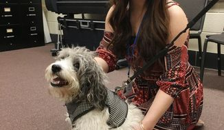 ADVANCE FOR MONDAY FEB. 27 AND THEREAFTER This Tuesday Feb.21, 2017 photo shows seventeen-year-old Shay Linder, a co-op for the Administrative Support Class at the Wood County Technical Center, with Gatsby, a seven-year-old beagle-poodle mix at the center in Parkersburg, W.Va. Gatsby was approved by the Wood County Board of Education as a therapy dog for the center. Gatsby is the fifth therapy dog serving in Wood County Schools. (Michael Erb/The News and Sentinel via AP)