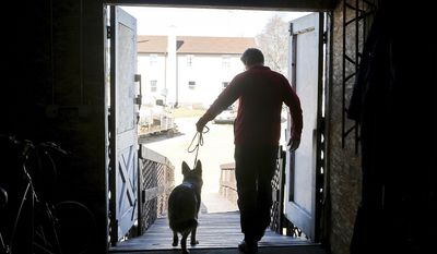 ADVANCE FOR MARCH 4-5 AND THEREAFTER - In a Tuesday, Feb. 21, 2017 photo, Kent Boyles, part-owner and handler of the Westminster Kennel Club's 2017 Best in Show winner, Rumor, exits a barn with the prize-winning German shepherd on his property near Edgerton, Wis.  (John Hart/Wisconsin State Journal via AP)