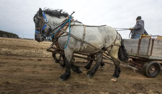 In a March 29, 2017 photo, Jason Julian, a sub-contractor for US Cellular, uses a team of horses to transport supplies to a US Cellular phone tower through muddy, uneven terrain in Portage County, Wis. Old and new technology are merging in rural Wisconsin, as U.S. Cellular is using draft horses to help install cellphone equipment.  (Tyler Rickenbach/The Post-Crescent via AP)
