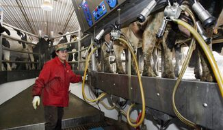 FILE - In this March 5, 2009, file photo, an Hispanic man works at a dairy farm in Fairfield, Vt. U.S dairy farmers struggling with low milk prices worry that President Donald Trump's 2017 talk of renegotiating the North American Free Trade Agreement could harm trade to Mexico, its biggest export market. (AP Photo/Toby Talbot, File)