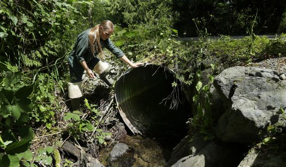 FILE - In this June 22, 2015 photo, Melissa Erkel, a fish passage biologist with the Washington Dept. of Fish and Wildlife, looks at a culvert, a large pipe that allows streams to pass beneath roads but block migrating salmon, along the north fork of Newaukum Creek near Enumclaw, Wash. On Friday, May 19, 2017, a federal appeals court declined to reconsider a ruling that Washington state says will require it to pay nearly $2 billion on salmon habitat. (AP Photo/Ted S. Warren, file)