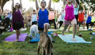 ADVANCE FOR SUNDAY JUNE 25 AND THEREAFTER - In a  June 16, 2017 photo, East Bound and Down Icehouse hosts the first goat yoga class at Eastbound and Down Icehouse in Dallas. (Tailyr Irvine/The Dallas Morning News)