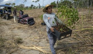 Forestry researcher Jhon Farfan carries saplings to replant a field damaged by illegal gold miners in Madre de Dios, Peru, on March 29, 2019. The rainforest is under increasing threat from illicit logging, mining and ranching. Farfan's job involves inspecting lands where the forest has already been lost to illegal mining spurred by the spike in gold prices following the 2008 global financial crash. (AP Photo/Rodrigo Abd)