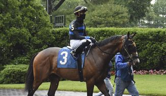 In this photo provided by the New York Racing Association, Fauci, jockey Tyler Gaffalione up, is led from the paddock to the track for a horse race at Belmont Park in Elmont, N.Y., Wednesday, June 3, 2020. The racehorse named for Dr. Anthony Fauci finished second in his debut. The 2-year-old colt was beaten by a horse named Prisoner in the third race. (Adam Coglianese/NYRA via AP)