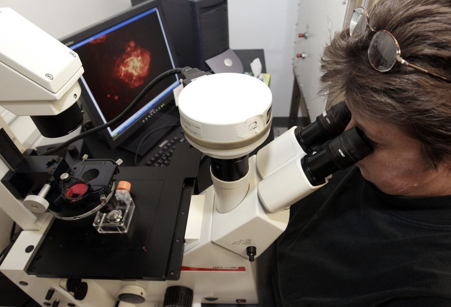 **FILE** In this Oct. 22, 2008 photo, Theresa Gratsch, a Ph.D. research specialist, views nerve cells derived from human embryonic stem cells under a microscope at the University of Michigan Center for Human Embryonic Stem Cell Research Laboratory in Ann Arbor, Mich. (Associated Press)