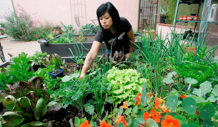 "**FILE** Adriana Martinez, an accountant, says her neighborhood gardening co-op in Long Beach, Calif., has fostered a sense of community and helped her reduce her grocery bill to $40 a week. ""We're helping to feed each other, and what better time than now?"" she said. (Associated Press)"