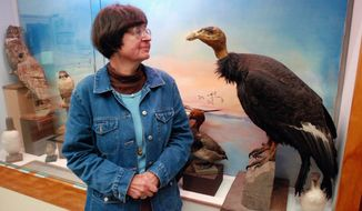 ** FILE ** Pam Service, curator of the Clarke Historical Museum in Eureka, Calif., guards a stuffed condor, one of the last to fly over California's North Coast. (Associated Press)