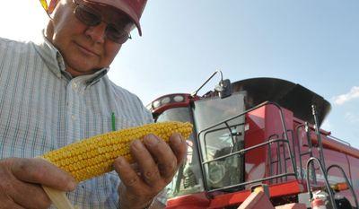 **FILE** Doug Kleckner inspects an ear of corn on his farm near St. Ansgar, Iowa, on Sept. 15, 2009. (Associated Press)