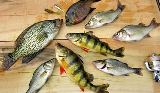 A variety of fish caught in a tidal creek provided a sumptuous November dinner. (The Washington Times)