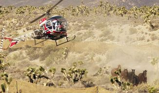 A Bureau of Land Management helicopter rounds up wild horses near Cold Creek, Nev., in June 2002. A similar operation is under way to capture about 2,500 wild horses in the next two months. (Associated Press)