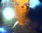 Gulf Oil Spill- Conta_Lea.jpg