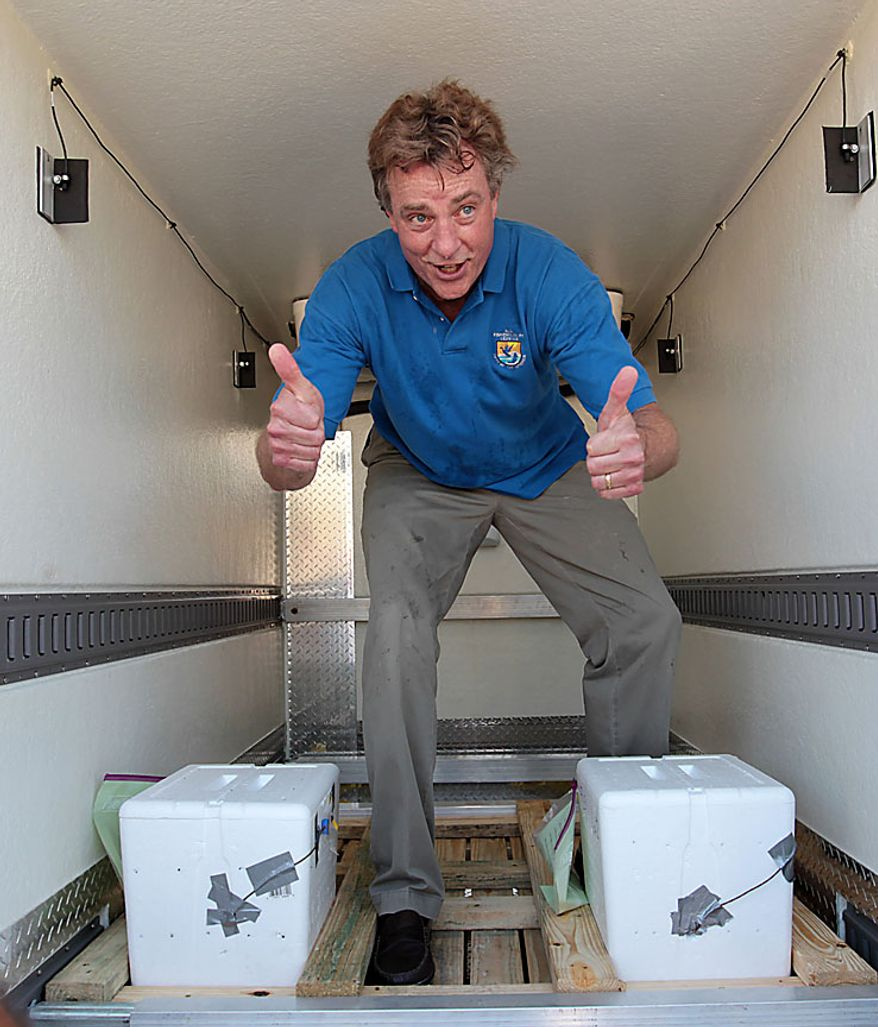 Thomas Strickland of the U.S. Dept. of the Interior gives a thumbs up after loading two coolers of sea turtle eggs into a Fed Ex truck after harvesting them from the sand in Port St. Joe, Fla.,  Friday, July 9, 2010.  U.S. Fish and Wildlife and other authorities are relocating thousands of sea turtle eggs to a warehouse on the East coast of Florida in an effort to save them from an oily death from the Deepwater Horizon incident. (AP Photo/Dave Martin)