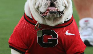 In this Sept. 20, 2008 file photo, Uga VII, the seventh English bulldog mascot for the University of Georgia team, who died last football season, keeps to the sidelines in Tempe, Ariz. Dogs with pushed-back faces such as English bulldogs and pugs accounted for roughly half the purebred dog deaths on airlines in the past five years, the Transportation Department disclosed Friday. (AP Photo/Ross D. Franklin, File)