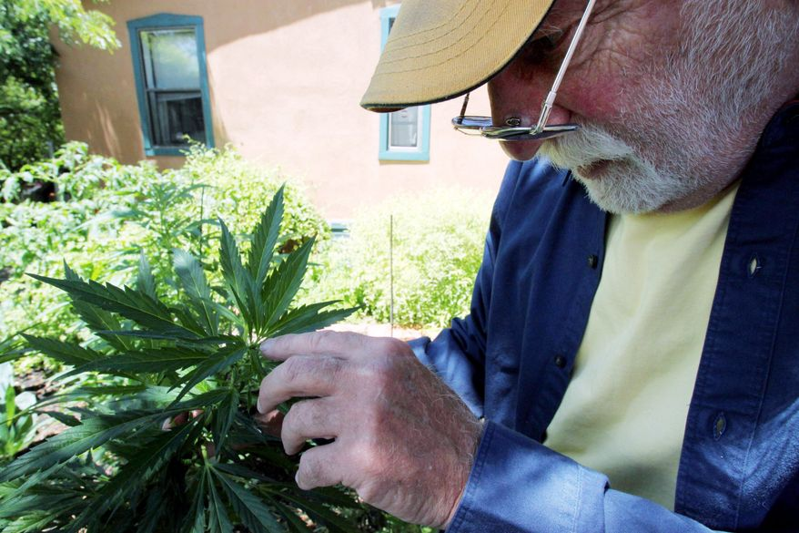 Associated Press Len Goodman inspects one of his marijuana plants near Santa Fe, N.M. He is one of 11 growers approved by New Mexico to produce pot for the state's 2,000 medical marijuana patients.