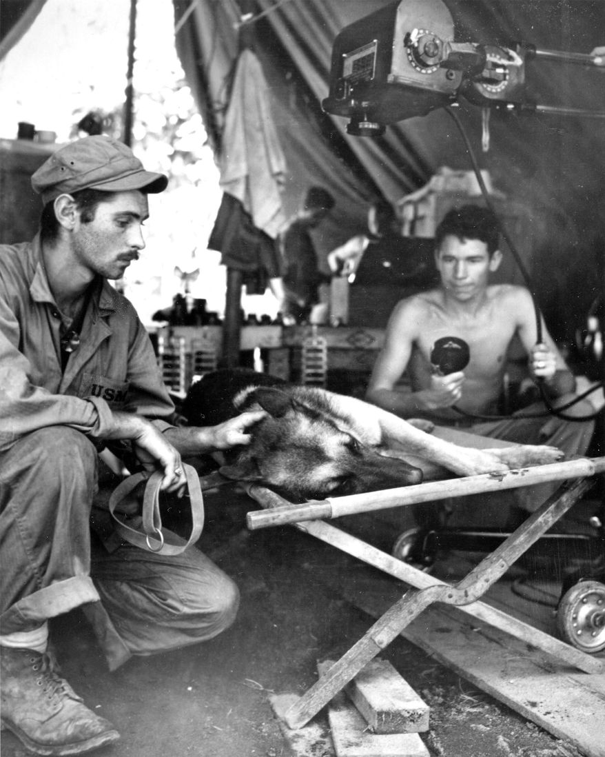 This undated photo provided by the National Archives via the National World War II Museum shows a Marine Corps dog handler as he comforts his German shepherd while the dog is X-rayed after being shot by a Japanese sniper on Bougainville. The dog died of its injuries. (AP Photo/National Archives via the National World War II Museum)
