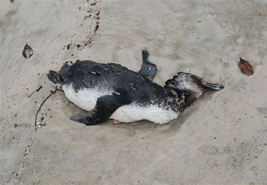 In this photo released by Aquario Municipal de Peruibe, a dead penguin sits on the sand at Peruibe beach in Sao Paulo state, Brazil, July 17, 2010. Hundreds of penguins that apparently starved to death are washing up on the beaches of Brazil, worrying scientists who are still investigating what's causing them to die.(AP Photo/Aquario Municipal de Peruibe)