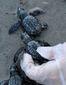 turtle_3607