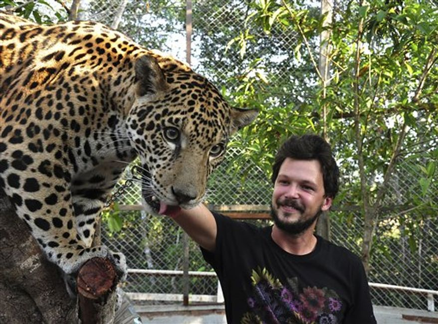 In this photo released by Sincrocine Producoes Cinematograficas , Brazilian actor Guilherme Berenguer touches the 15-month-old jaguar named Catarina in  Santarem, Para state, Brazil, Aug. 2010. Catarina, an endangered spotted jaguar rescued from poachers, is one of the stars of a soon-to-released feature film shot in the Brazilian Amazon, officials said Thursday. (AP Photo/Sincrocine Producoes Cinematograficas)