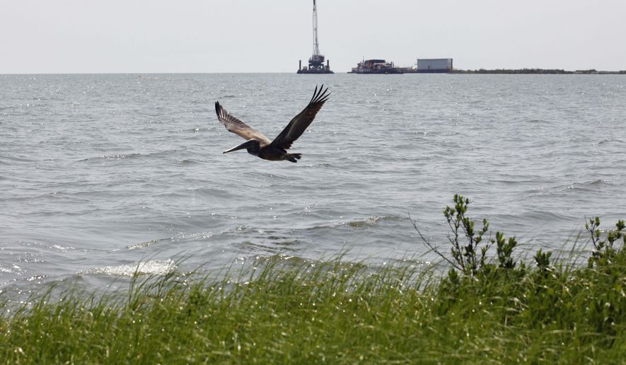 In this Tuesday, Aug. 10, 2010, photo, a pelican flies over new marsh grass in an area that had been impacted by the oil from the Deepwater Horizon oil spill near East Grand Terre Island, where the Gulf of Mexico meets Barataria Bay along the Louisiana coast. In the background is a dredging project initiated by the State of Louisiana. (AP Photo/Gerald Herbert)