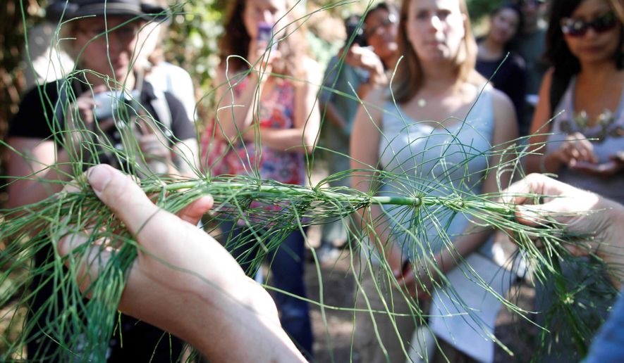 Kevin Feinstein shows a horsetail plant while leading a foraging walk in Oakland, Calif. Foodies and novelty chefs are learning to identify, harvest and prepare edibles that grow in the wild as a way to connect with their environment. (Associated Press)