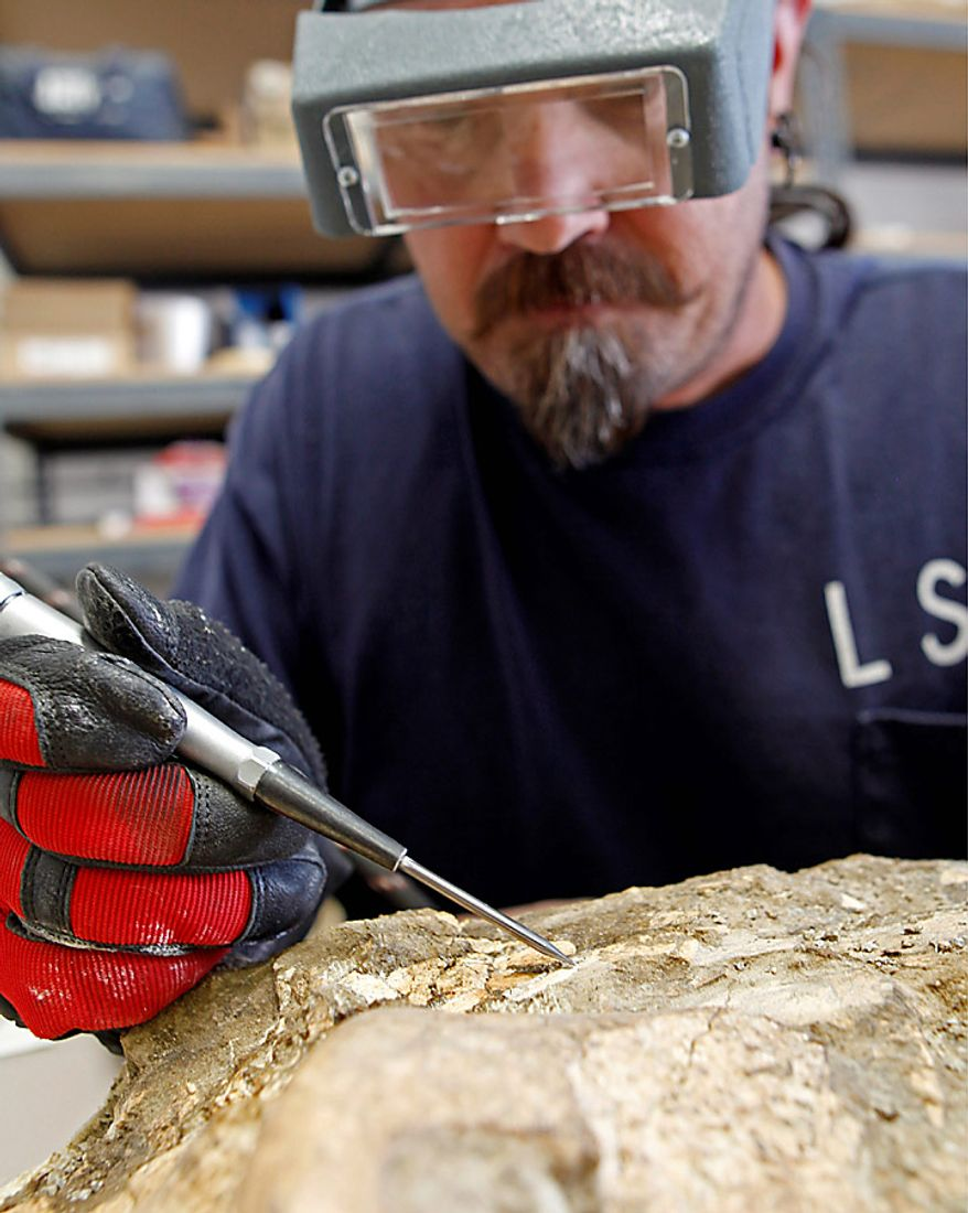 Specimen preparer Carl Bennett uses a compressed air tool to remove foreign materials from the fossilized skull of a giant sloth, in Riverside, Calif., Monday, Sept. 20, 2010.  Utility workers preparing to build a new substation in an arid canyon southeast of Los Angeles stumbled on a trove of animal fossils dating back 1.4 million years that researchers say will fill in blanks in Southern California's history. (AP Photo/Reed Saxon)
