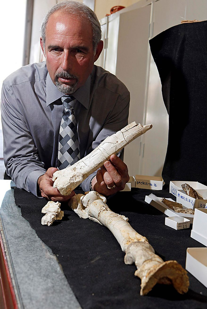 Rick Greenwood, director of Corporate Environment, Health and Safety for Southern California Edison, poses with the fossilized leg bones of a precursor to the modern horse, in Riverside, Calif., Monday, Sept. 20, 2010.  Utility workers preparing to build a new substation in an arid canyon southeast of Los Angeles stumbled on a trove of animal fossils dating back 1.4 million years that researchers say will fill in blanks in Southern California's history. (AP Photo/Reed Saxon)
