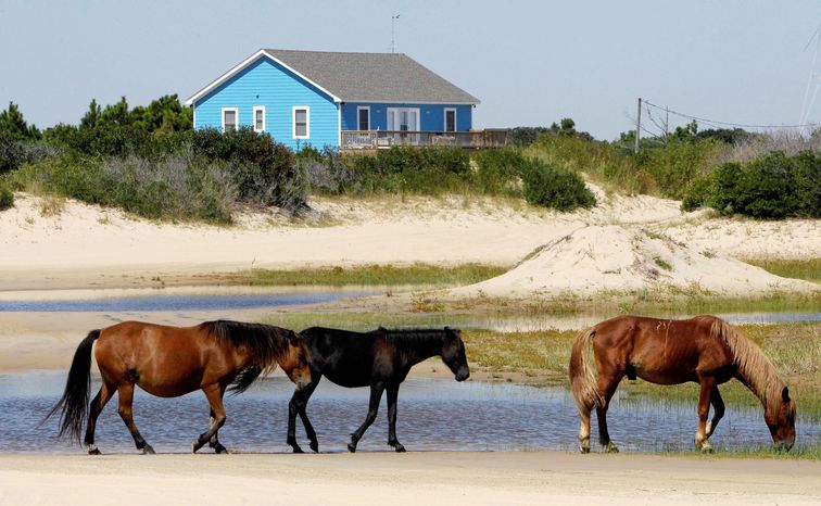 ASSOCIATED PRESS PHOTOGRAPHS Wild horses on the shore of Corolla, N.C., are losing habitat and genetic diversity as vacation homes are being developed. The U.S. Fish and Wildlife Service considers the herd a nuisance and wants to reduce the number from about 115 today to no more than 60.