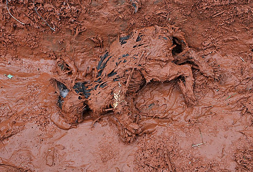 An animal  lies dead in the toxic mud, which flooded the village of Kolontar, Hungary, Tuesday, Oct. 5, 2010. Monday's flooding was caused by the rupture of a red sludge reservoir at an alumina plant in western Hungary and has affected seven towns near Ajkai, 100 miles (160 kilometers) southwest of Budapest. The flood of toxic mud killed killed a yet unknown number of people, injured more than one hundred, with some people still missing. (AP Photo/Bela Szandelszky)