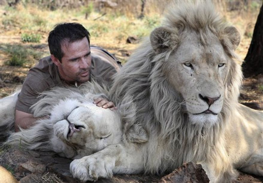"In this photo taken Monday Oct. 11, 2010, Kevin Richardson, a.k.a. the Lion Whisperer snuggles a lioness to his chest in an enclosure at the Kingdom of the White Lion park in Broederstroom, near Johannesburg South Africa. A new film opening in the United States on Friday about a rare white lion who escapes becoming a trophy on a wall is a rare happy ending in a country where more than 1,000 lions are killed legally each year. Richardson, the man behind the movie, calls himself an ""ambassador of lions"" and hopes the film will act as one too at a time when foreign tourists are willing to pay up to $40,000 to shoot a big cat.  (AP Photo/Denis Farrell)"