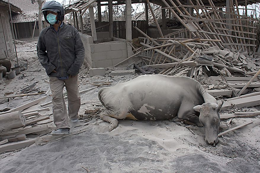 """A villager walks past a buffalo killed in  Mount Merapi eruption in Kinahrejo, Yogyakarta, Indonesia, Wednesday, Oct. 27, 2010. A volcanic eruption and a tsunami killed scores of people hundreds of miles apart in Indonesia, spasms from the Pacific """"Ring of Fire,"""" which spawns disasters from deep within the Earth. (AP Photo/Gembong Nusantara)"""
