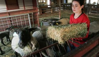Fresno State pre-veterinarian student Justeen Borrecco feeds hay to stock at the school's sheep unit in Fresno, Calif. Large-animal vets play a vital public health role as inspectors at ranches and slaughterhouses. (Associated Press)