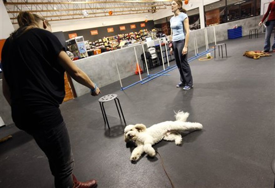 "This Monday, Oct. 25, 2010 photo shows Gigi, background, and Karl Blatt, right, as they work with Adora on an agility course at Zoom Room in Los Angeles. Zoom Room is a ""social petworking"" club and canine agility training center founded by Jaime Van Wye.     (AP Photo/Richard Vogel)"