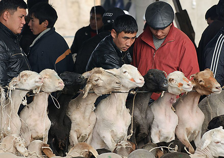 People choose sheep for sacrifice to celebrate the Eid al-Adha at a local market in the village of Ak-Bata outside the capital Bishkek, Kyrgyzstan, Tuesday, Nov. 16, 2010. Muslims throughout the world celebrate the holiday of Eid al-Adha, Feast of Sacrifice, when Muslims around the world slaughter sheep and cattle in remembrance of Abraham's near-sacrifice of his son. (AP Photo/Maxim Shubovich)