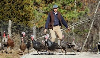 Bill Battles and his Border collie, Lilly, herd Mr. Battles' flock of Heritage turkeys on his Stone Pony Farm in Westport, Mass. (Associated Press)