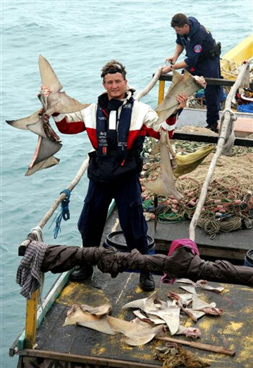 FILE  - In this undated photo released by the Australian Customs Service on  April 5, 2006, an officer holds drying shark fins found on a suspected illegal fishing boat in the waters off Cape Wessel in the Northern Territory of Australia.  Sharks are in trouble, and scientists say the world has a chance to protect them by setting Atlantic catch limits at international conservation conference this week in Paris. While fishing is tightly regulated, there are almost no rules when it comes to catching sharks, scientists say.  (AP Photo/Australian Customs Service, HO)