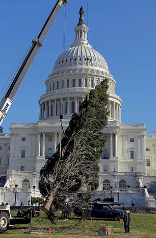 The Capitol Christmas tree is placed on the West Front of the Capitol in Washington, Monday, Nov. 29, 2010. The tree was cut down earlier this month in the Bridger-Teton National Forest in northwest Wyoming. (AP Photo/Alex Brandon)