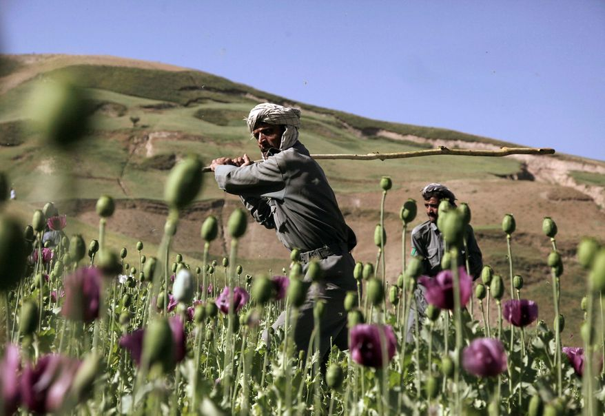 POPPING UP: Afghan police have helped cut down illegally grown poppies but eradication efforts have been hindered by a lack of security. (Associated Press)