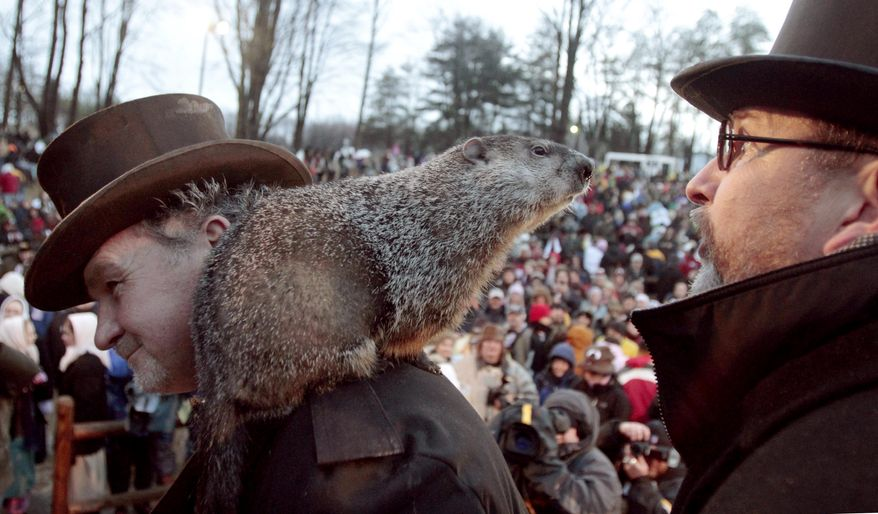 Punxsutawney Phil, the weather-predicting groundhog, stands on the shoulder of one of his handlers, John Griffiths, while looking at another handler, Ben Hughes, after the Groundhog Club claimed that Phil did not see his shadow and winter will end soon after Groundhog Day, Wednesday, Feb. 2, 2011, in Punxsutawney, Pa. (AP Photo/Keith Srakocic)