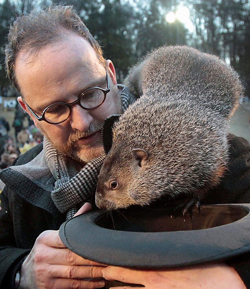 Punxsutawney Phil, the weather-predicting groundhog, crawls off the shoulder of handler Ben Hughes during the annual Groundhog Day festivities on Wednesday, Feb. 2, 2011, in Punxsutawney, Pa. The Groundhog Club claimed that Phil did not see his shadow and predicted that winter will end soon. (AP Photo/Keith Srakocic)