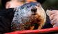 groundhog_4105